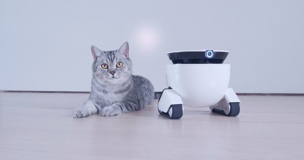 Roboming Fellow, votre chat va l'adopter